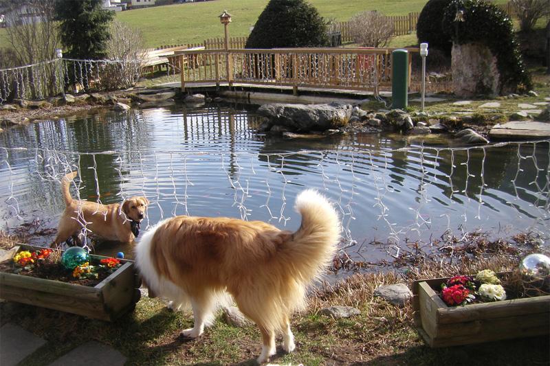 Hundeschwimmteich