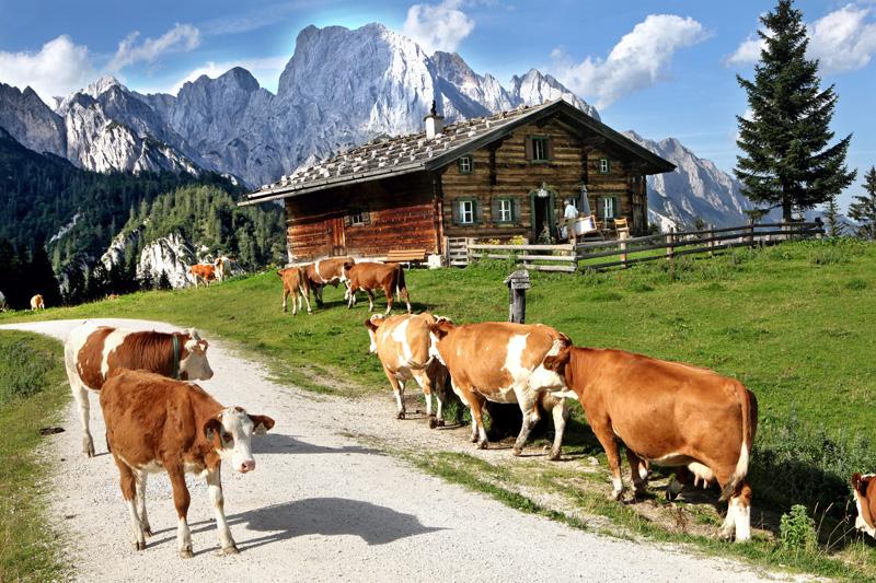 Almsommer im Salzburger Saalachtal