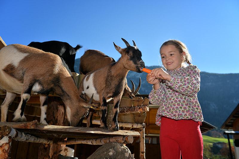 Ziegen auf der hauseigenen Ranch
