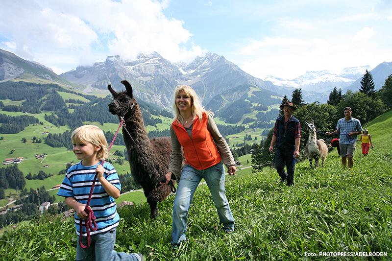 Lama-Trekking in Adelboden