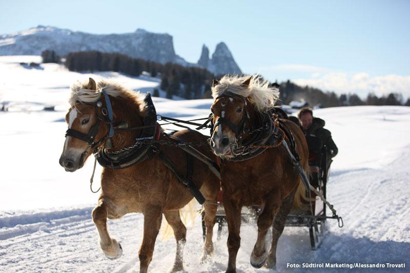 Pferdeschlittenfahrten auf der Seiser Alm