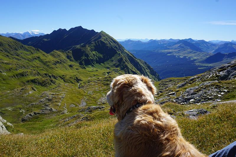 AlphotelTyrol-Hund