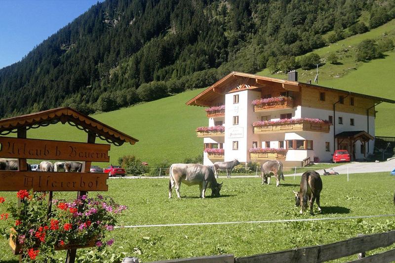 Bauernhof mit Tiroler Grauvieh Kühen