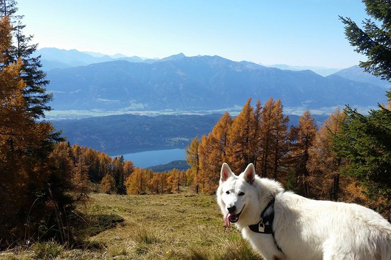 In der Herbstwanderung die Aussicht genießen