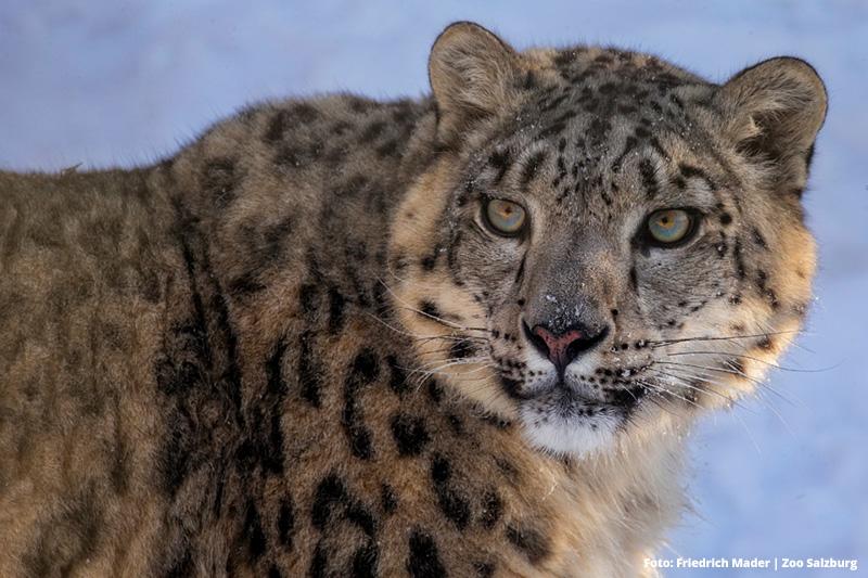 Zoo Salzburg nur 55 Min. entfernt | 365 Tage im Jahr geöffnet