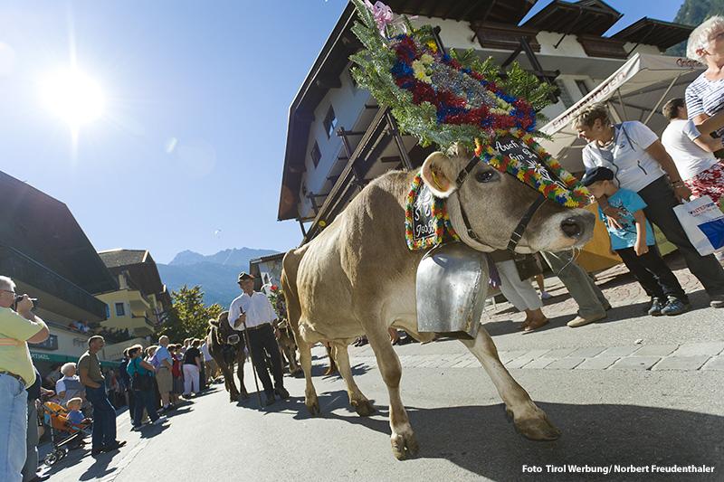 Almabtrieb in Mayrhofen
