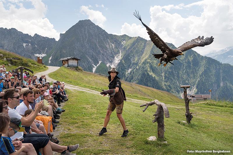 Greifvogelshow Adlerbühne am Ahorn