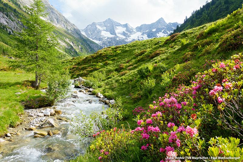 Mayrhofen-Hippach Sommerpanorama