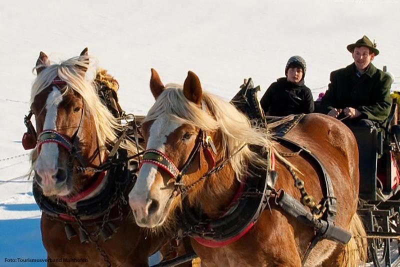 Pferdekutschenfahrten und Reiten