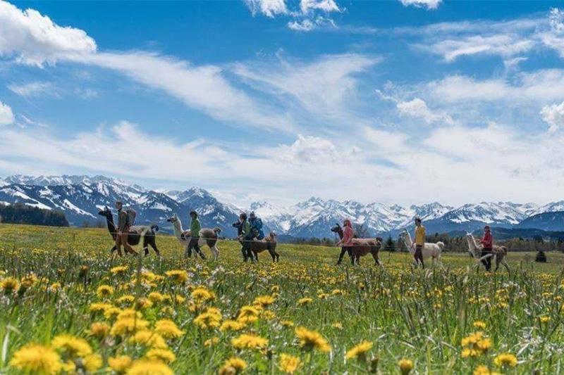 Lamawandern in Maria Gern bei Berchtesgaden