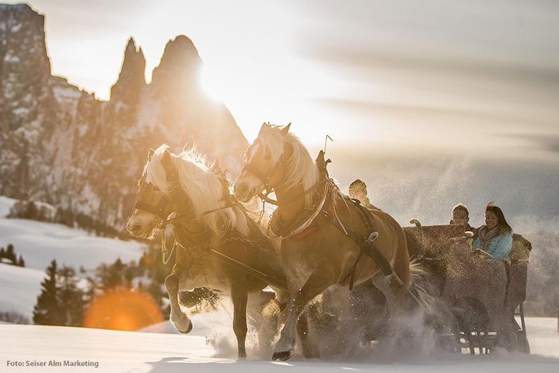Mit dem Pferdeschlitten durch die Dolomiten