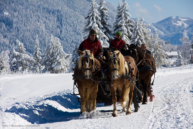 Pferdeschlittenfahrten am Weissensee