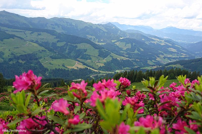 Sommerurlaub in den Kitzbüheler Alpen