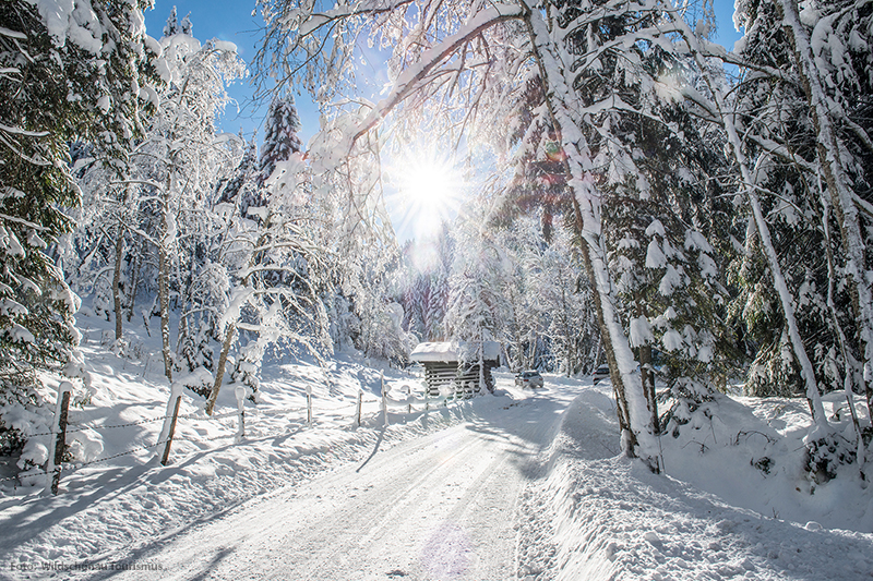 Winterlandschaft Kitzbüheler Alpen - Wildschönau