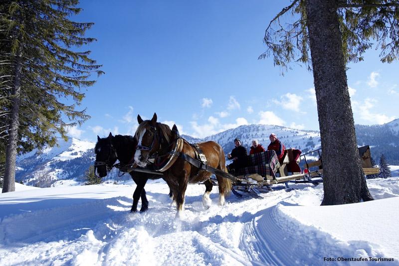 Pferdeschlittenfahren in Oberstaufen