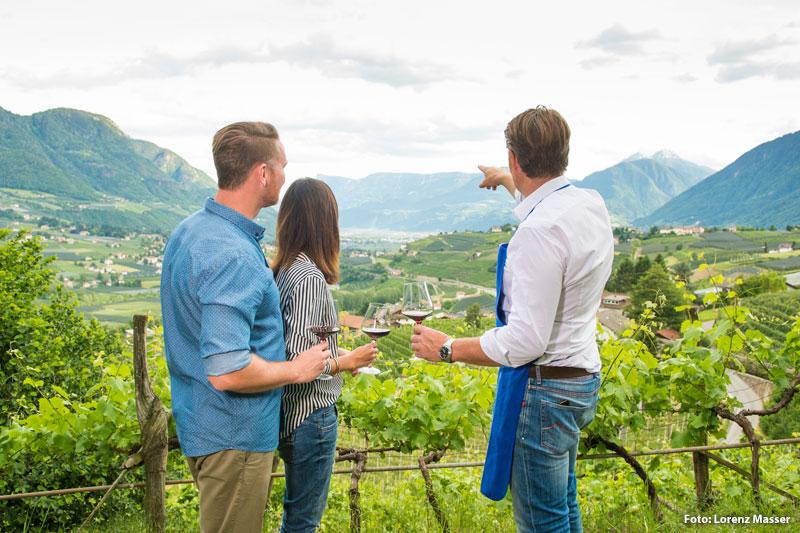 Weingebiet Dorf Tirol