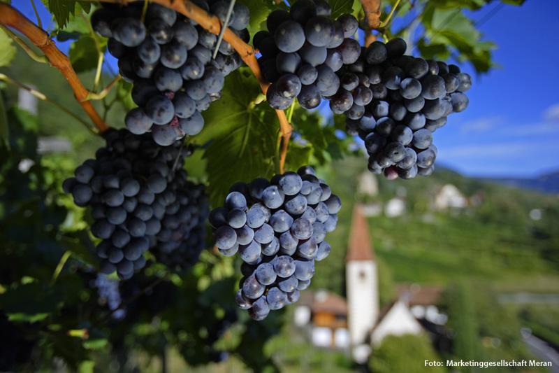 Weißwein und Rotwein aus Südtirol