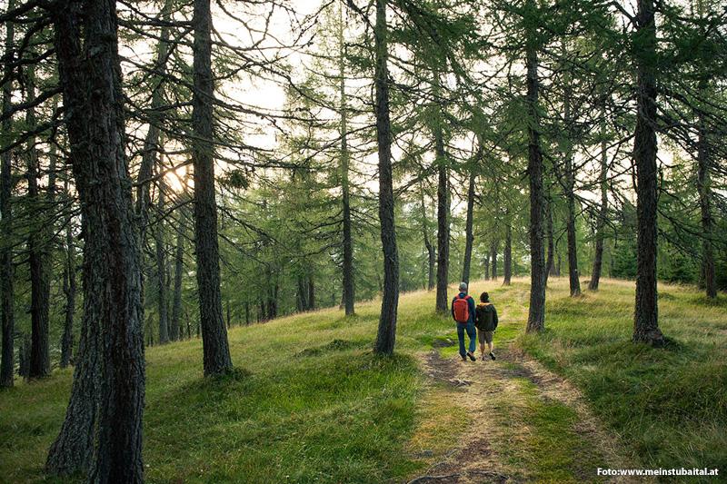 Gemütliche Waldwanderung im Stubaital