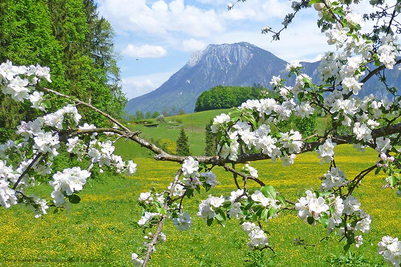 Frühlingsurlaub in Bayern