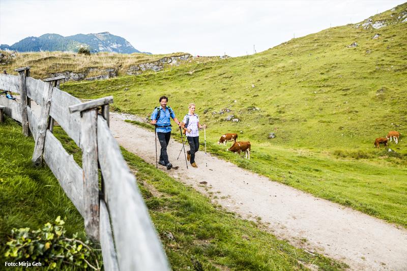 Wandern in der schönen Natur - ab und an begrüßt man hier auch die Kühe
