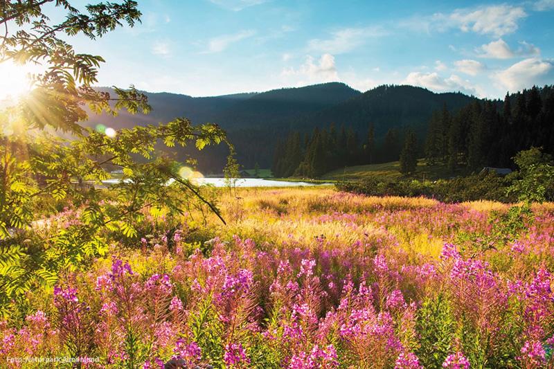Der Naturpark Almenland ist das größte zusammenhängende Niedrig-Almweidegebiet in Europa