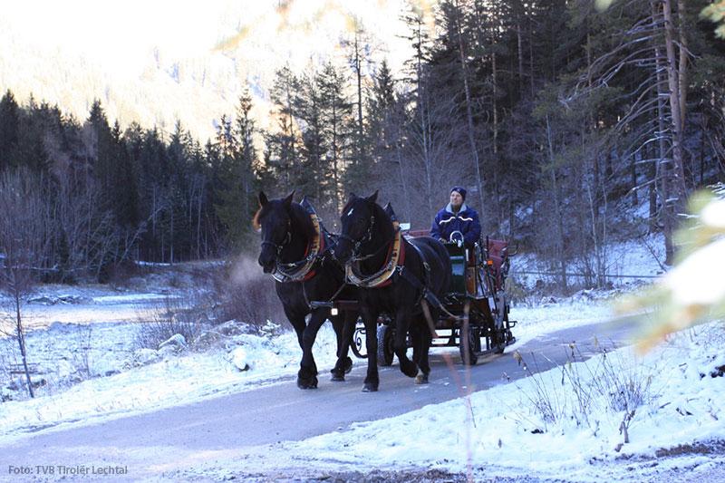 Pferdeschlittenfahrten im Lechtal