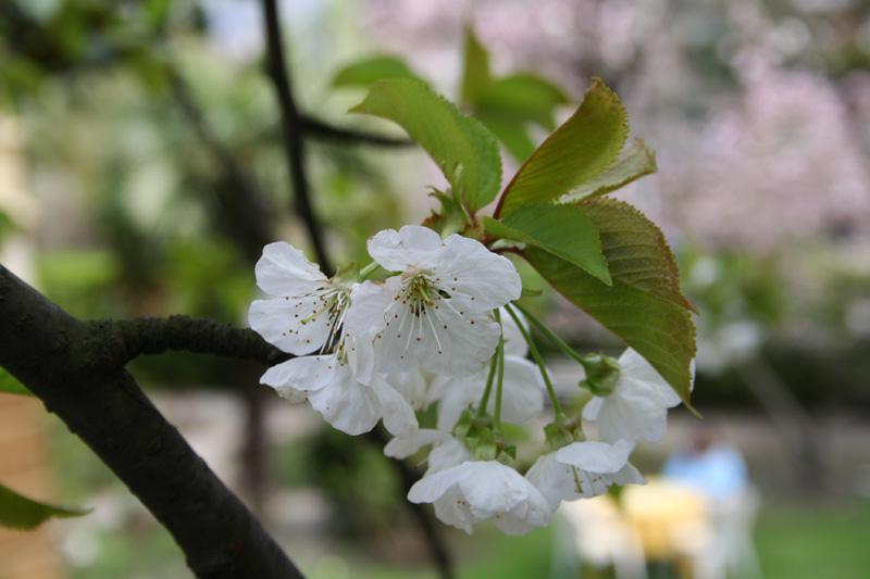 Ein Highlight ist die Blütezeit im Meraner Land