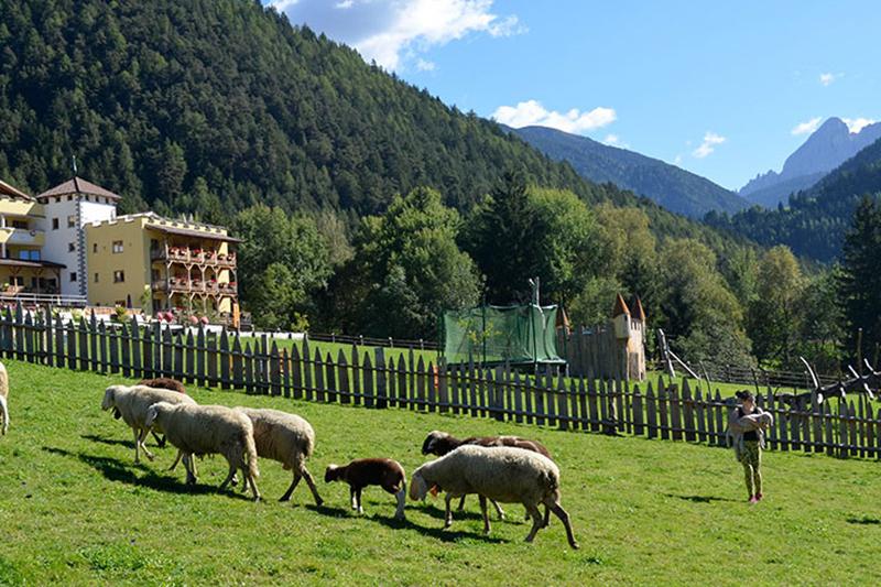 Zum Streichelzoo im Hotel Bergschlössl in Lüsen gehören neben den Kleintieren wie Kaninchen und Hasen auch Schafe