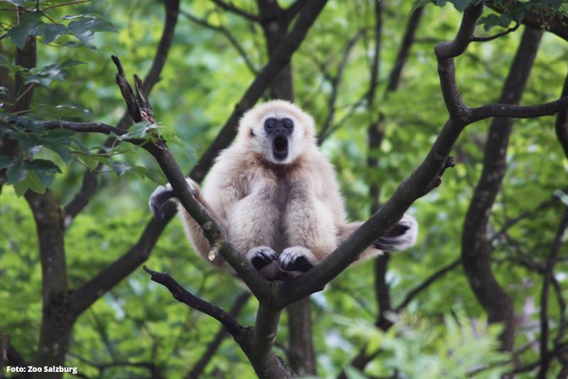 Zoo Salzburg | 365 Tage im Jahr geöffnet