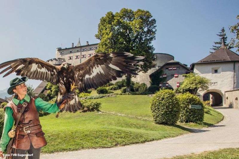 Falkner auf der Erlebnisburg Hohenwerfen