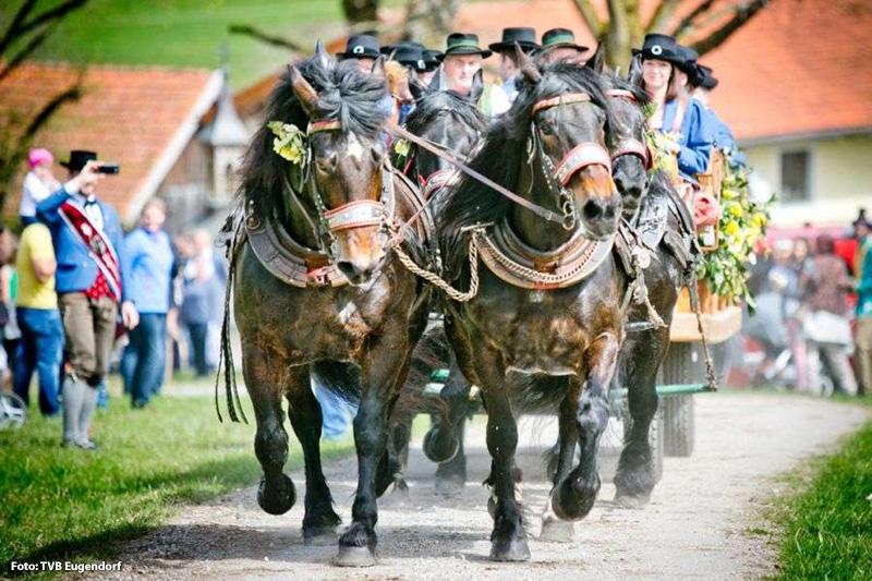 Georgiritt in Eugendorf - Jahrhundertealte Tradition