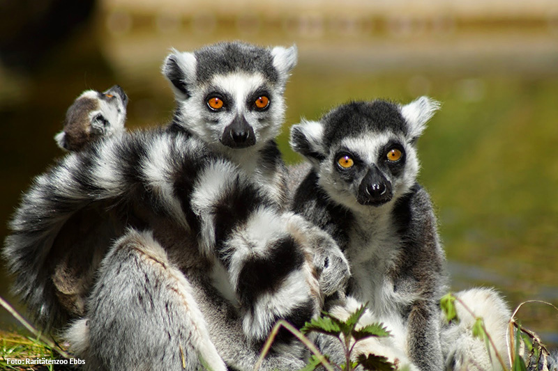 Raritätenzoo Ebbs - 500 Tiere, 70 Tierarten