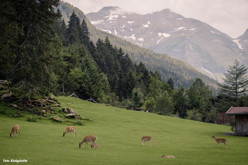 Wild- & Erlebnispark Ferleiten gehört zu den beliebtesten Ausflugszielen und ist von Viehhofen nur 30 Autominuten entfernt