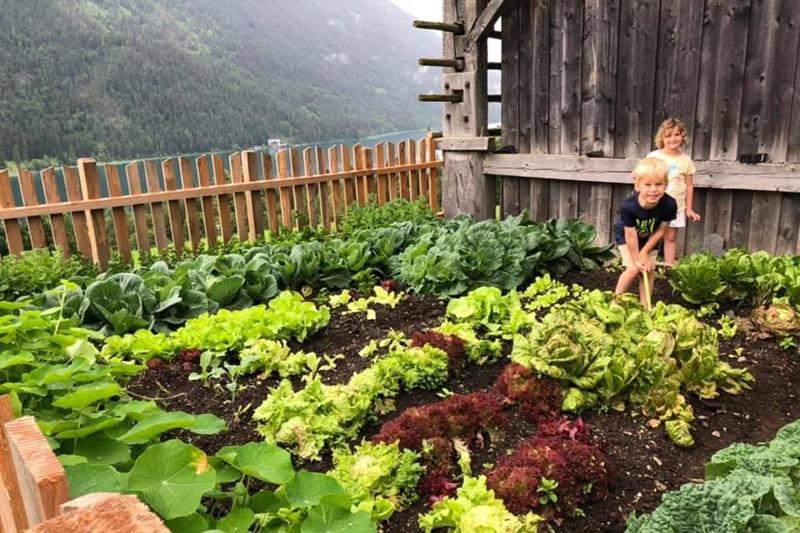 Gemüse aus der eigenen Landwirtschaft