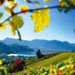 Für Weinliebhaber, Wanderfans oder Kulturinteressierte ist Eppan an der Weinstraße das perfekte Urlaubsziel