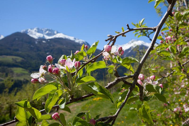 Kurzurlaub im Vinschgau