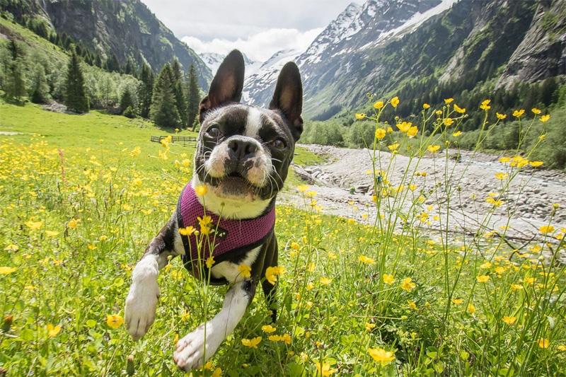 Schnupper-Kennenlerntage mit Hund