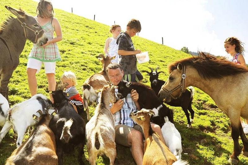 Die Ponys Amigo und Yuki, der Esel Prinz, Hasen, Hühner, Katzen, Ziegen und Schafe warten nur darauf gefüttert, gestreichelt, bewundert oder fotografiert zu werden.