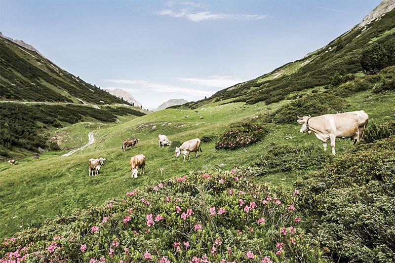 Sommerurlaub in Holzgau in Tirol